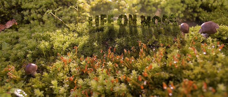 Life on Moss, A Short Nature Film About Snails & Insects Exploring Moss
