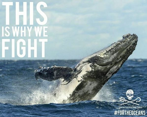 This is why we support @seashepherd fighting for these amazing creatures and never giving up! Thanks for the amazing work you do #fortheoceans