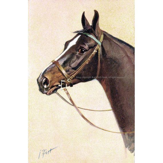 Horse Cotton Fabric  English Hunter Under by KatyDidsFabrics, $5.99
