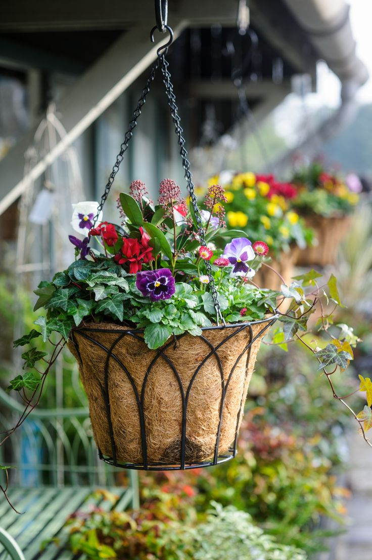 Flowers For Hanging Baskets In Winter : Top ideas about winter hanging baskets on