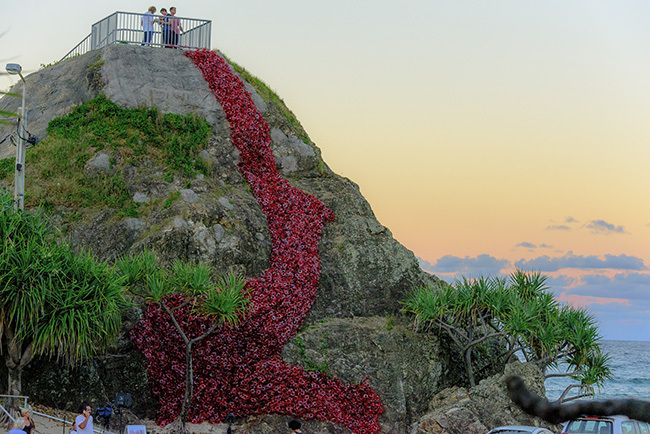 Elephant Rock and the Poppy Project installation for #ANZACDay