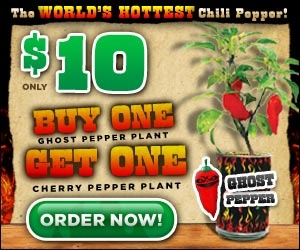 Ghost Chili Pepper plant, Buy 1 Get 1 Free!