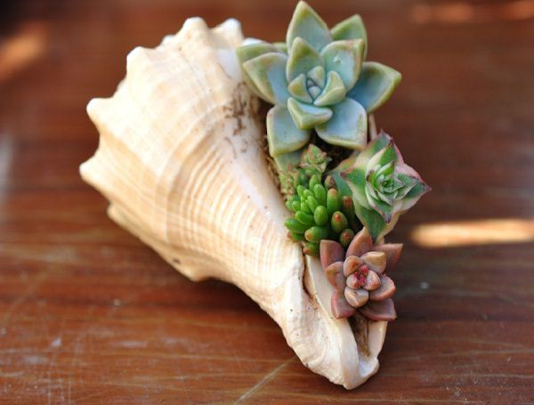 Astonishing Sea Shell Planter Ideas to Show Off Plants