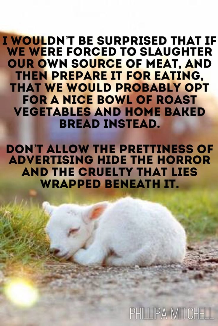 I wouldn't be surprised that if we were forced to slaughter our own source of meat, and then prepare it for eating, that we would probably opt for a nice bowl of roast vegetables and home baked bread instead. Don't allow the prettiness of advertising hide the horror and the cruelty that lies wrapped beneath it.