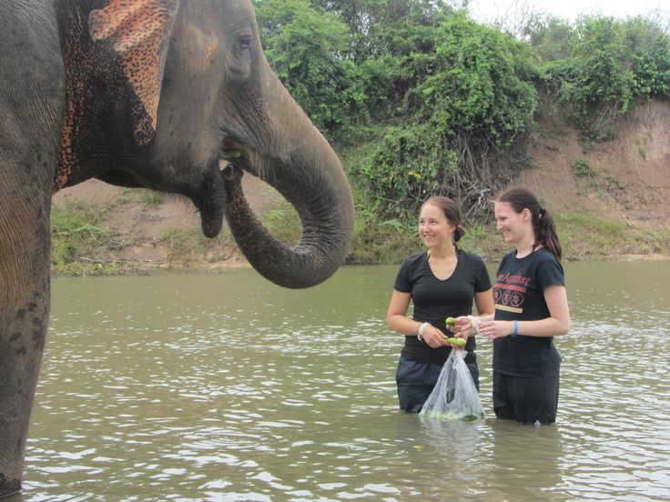 Feeding and caring for elephants