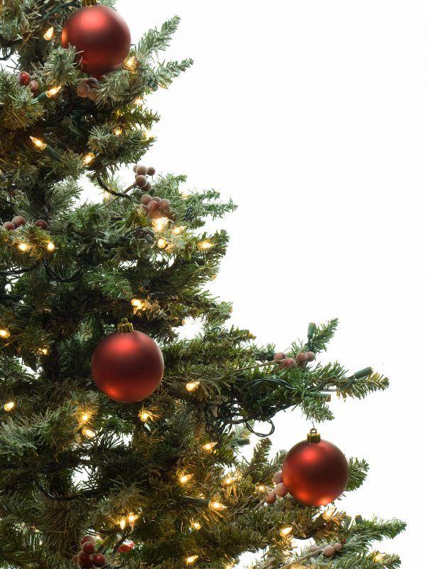 How To Keep A Christmas Tree Alive The Organic Goat Lady Christmas Tree Decorations Christmas Tree Tree