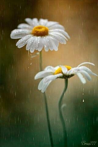 It rained in my heart and universe  12/23/16(2000)7/7/77 I'm hopeful :) I'm really excited to peacefully see what happens. Consider me submissive . The broken humble way. Peace and please <3