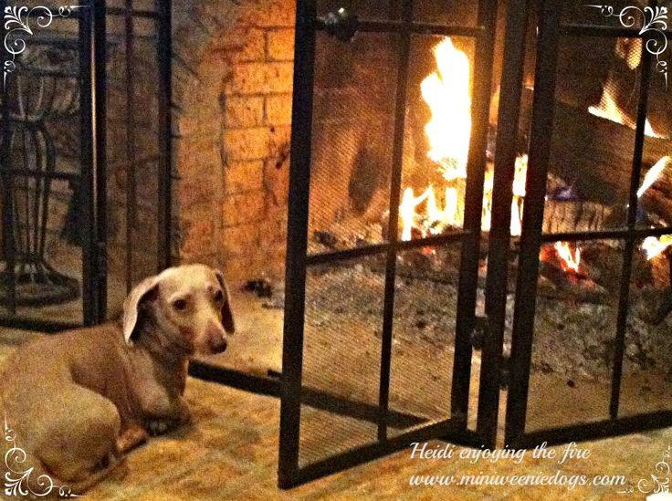 Heidi enjoying a nice warm fire on a cold night