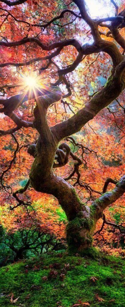 Autumn in all its splendor