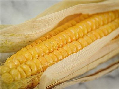 Breeding Sweet Corn :: Co-operative Tests