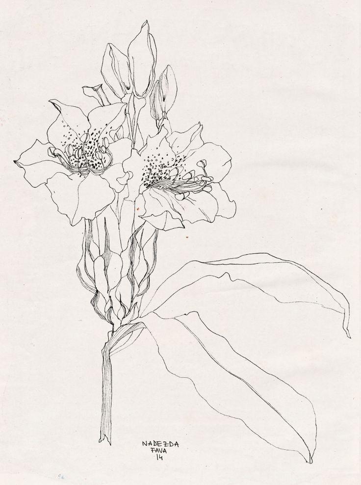 Pencil sketchbook - Nadezda Fava  Doodling near Molveno, graphite on paper.