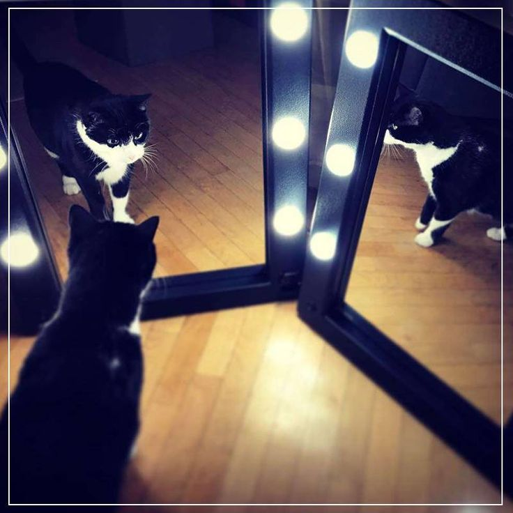 #cantonifan. Products shown: MW01.TSK multifunctional and portable makeup mirror. #cantoni #makeupstation #mirror #cat #mirrorwithlights