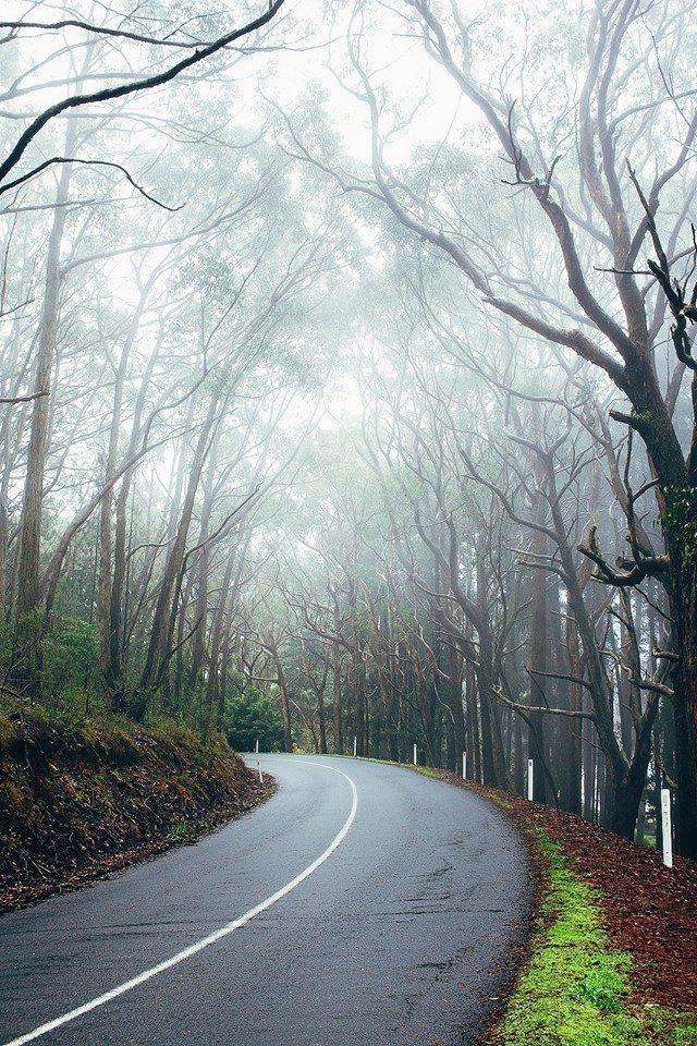 Lovely winter - Adelaide Hills