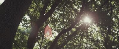 It was morning and the sun was shining through the canopy of leaves. The birds sang happily as they flew from tree to tree and a cool breeze blew through Morgan's hair. He was sitting up against a tree, sleeping through the noises of the morning.