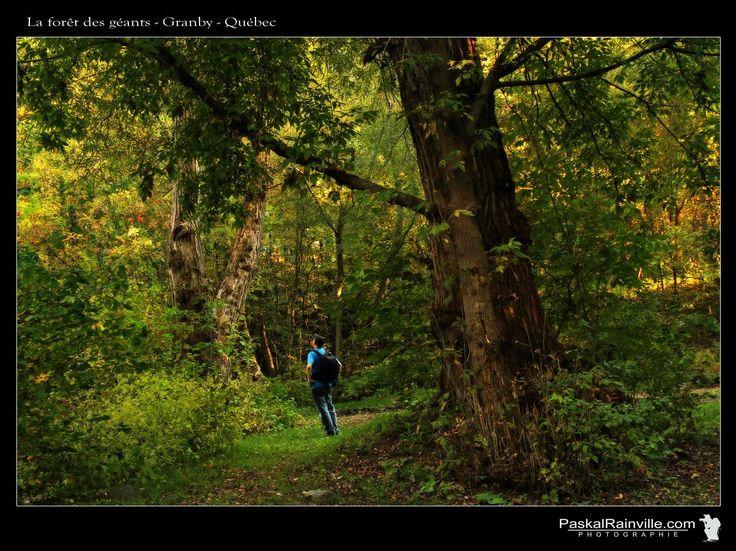 La forêt des géants Prise à Granby, Québec, Canada http://www.paskalrainville.com/
