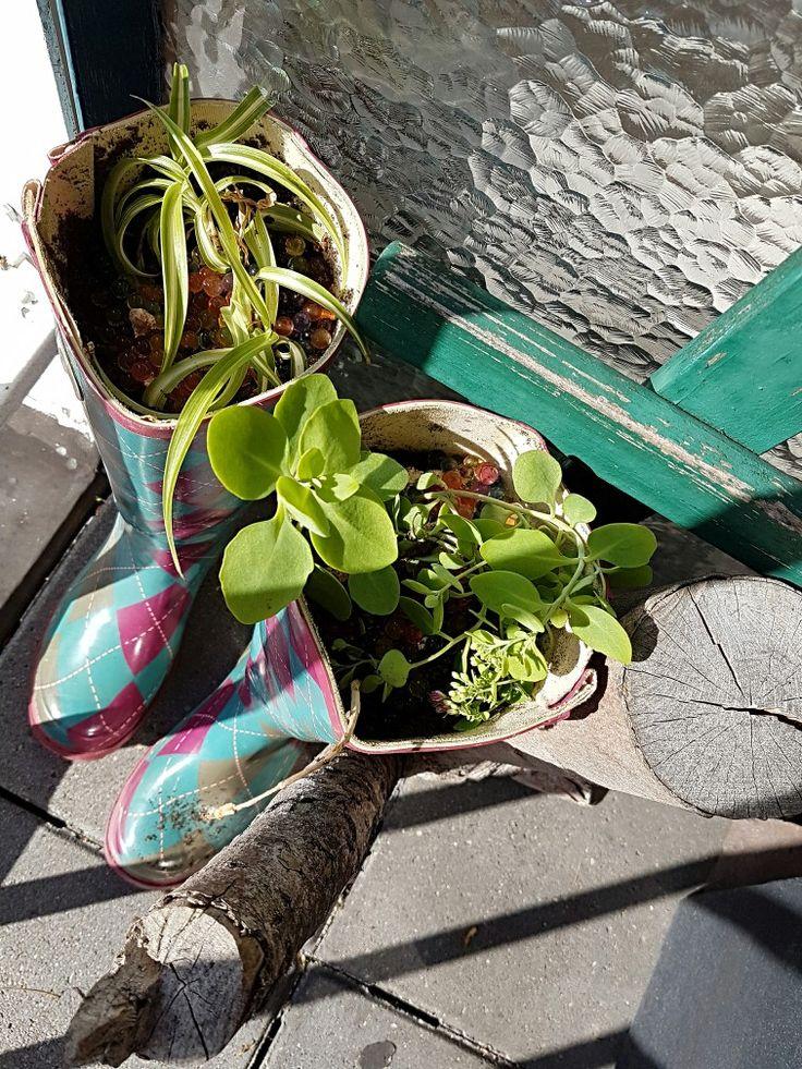 Oude laarzen als plantenbak
