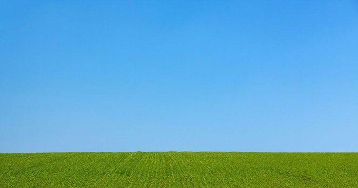 Céspedes resistentes a la sequía: ¡y ahorra muchísimo!