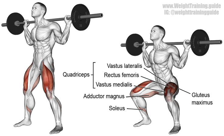 Barbell squat. Arguably the king of all compound exercises! Use it to build your legs and glutes, strengthen your core, and develop body-wide strength and power! Target muscles: Gluteus Maximus and Quadriceps. Synergists: Adductor Magnus and Soleus. Dynamic stabilizers (not highlighted): Hamstrings and Gastrocnemius. Numerous other muscles, all over the body, act as stabilizers. Note: I only highlight targets and synergists.