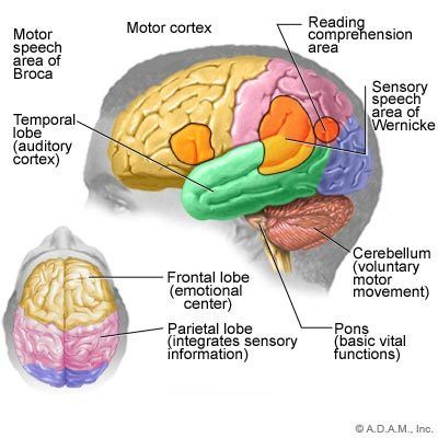 Is it possible to increase brain capacity photo 3