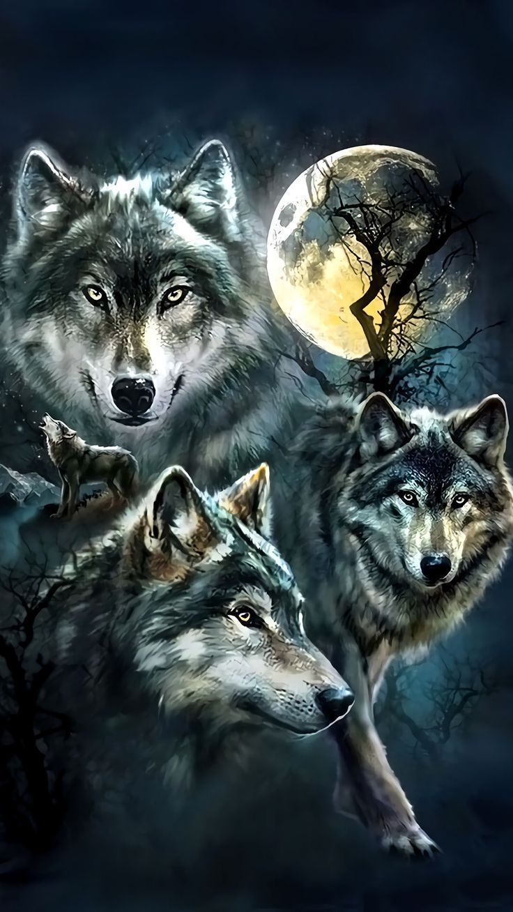 Iphone Wallpaper Animals220 Peinture de loup, Images