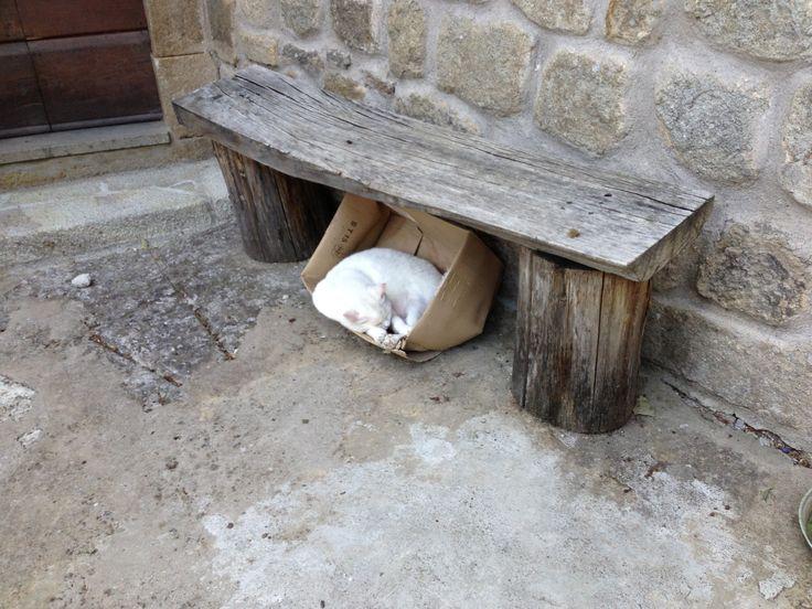 Un gatto addormentato nella sua cuccia