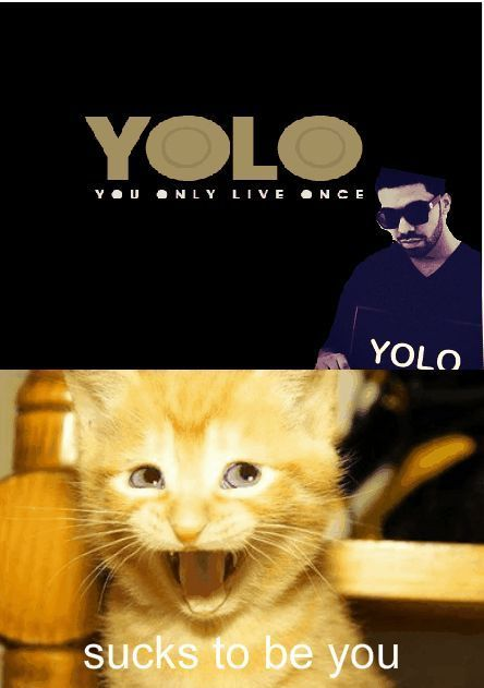oh cats: Yolo, Kitty Cat, Funny Stuff, I Love Cat, So Funny, Cat Faces, Hate Cat, Life Humor Quotes, Animal