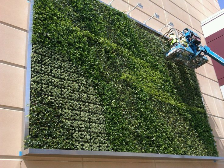 Beau Ambius Team Maintaining Exterior Vertical Garden