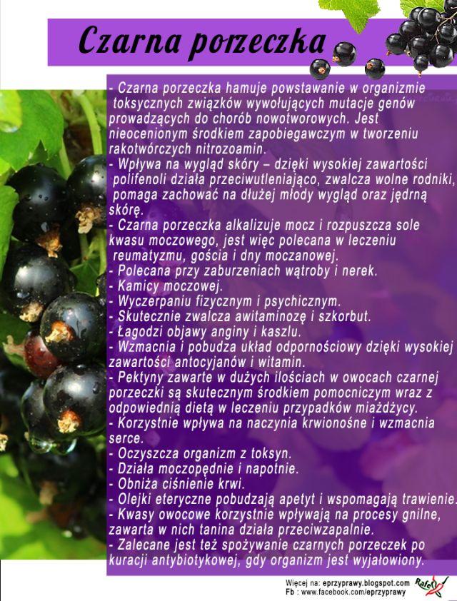 Blog o zdrowym i naturalnym odżywianiu, ziołach, przyprawach i roślinach.: CZARNA PORZECZKA - bogactwem nie tylko witaminy C ! ...