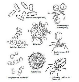 133 best Teaching About Germs images on Pinterest