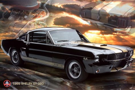 Ford Shelby - Mustang 66 GT 350