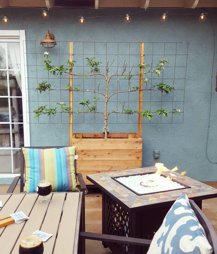 espalier fruit tree on back patio                                                                                                                                                                                 More