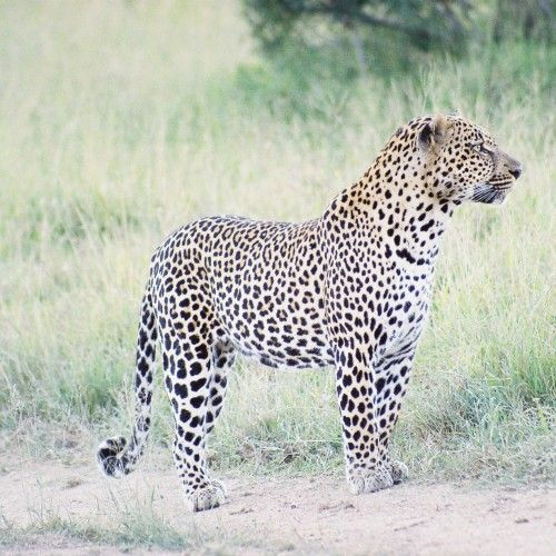 The Greater Kruger National Park offers a wildlife experience that will make you want to come back for more. Including multiple, private, unfenced reserves, accommodation options range from rustic to luxury. Contact us ~
