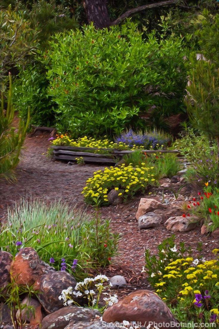 84 Best California Natives Images On Pinterest Yard Design California Native Garden And