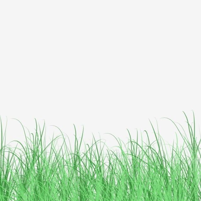 Decorative Green Space Fresh Green Grass Grassland Grass Green Grass Cartoon Green Grass Png Transparent Clipart Image And Psd File For Free Download Green Grass Background Dark Room Photography Cool Black