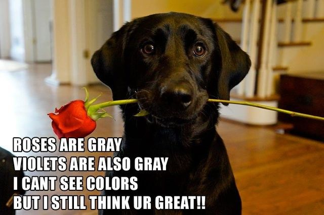 17 Valentine S Day Memes That Will Have You Loving Valentines Day Valentines Day Funny Meme Valentines Day Memes Funny Pictures