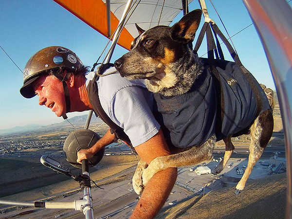 Shadow, the Hang Gliding Dog