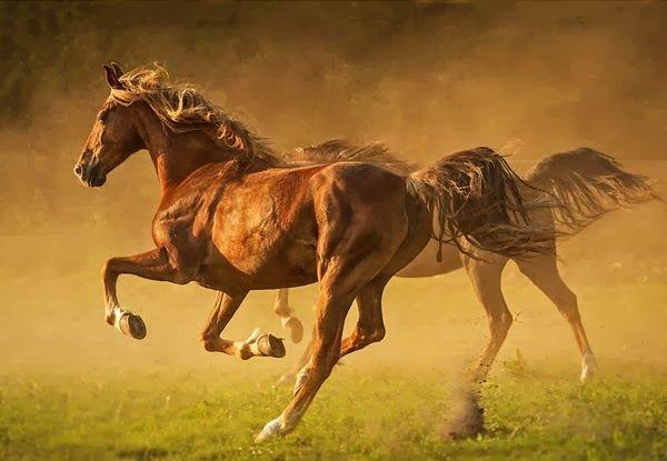 Speedy Horse