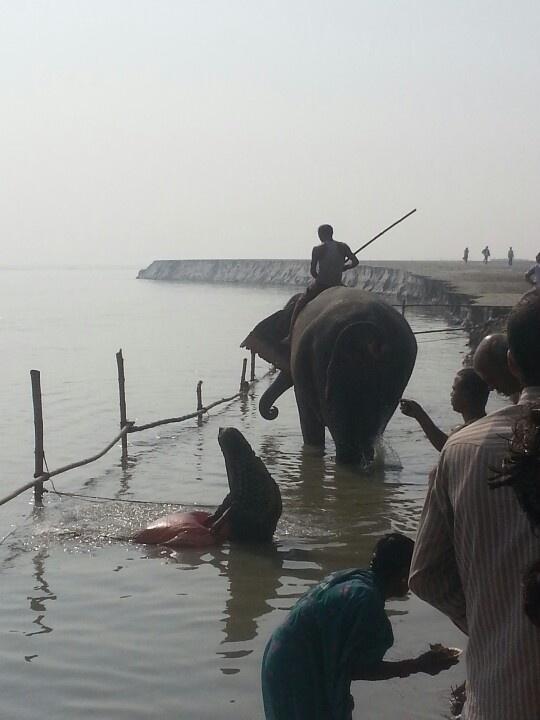 Sonepur Mela 2012