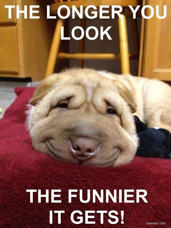 So adorable: Funnies Dogs, Funnies Pictures, Shar Pei, Cutest Dogs, Happy Puppys, Smile Dogs, Sharpei, Funnies Faces, Happy Dogs