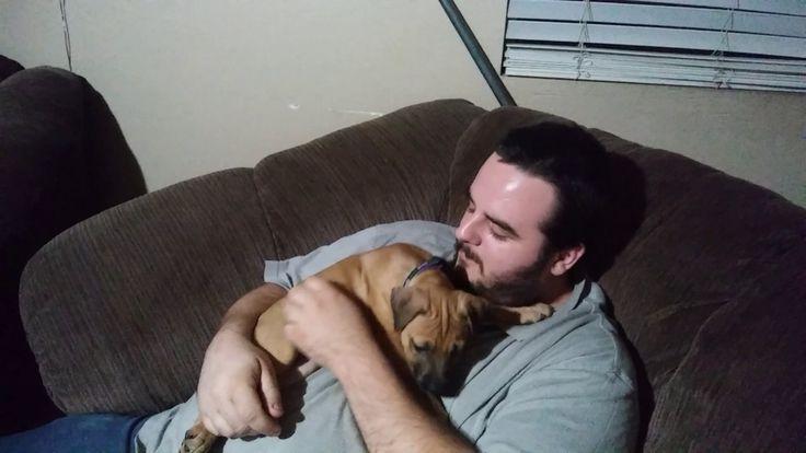 Brutally violent pitbull attacks and kills me https://m.youtube.com/watch?v=Bdl_3ndY2ys