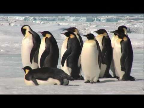 Fun Penguin Facts and Resources: An Elementary Teacher's Guide to All Things Penguin | hubpages