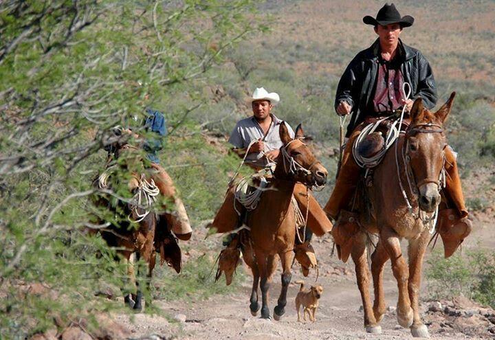 Vaqueros Caballo mula