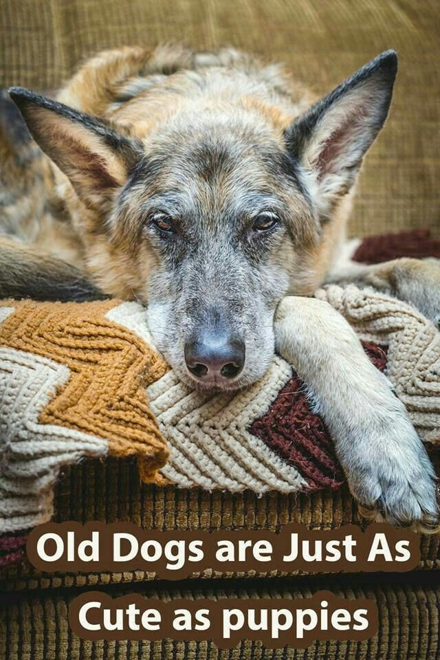 Old dogs are the sweetest and cutest living things on earth. We are very lucky to have such an awesome animal.