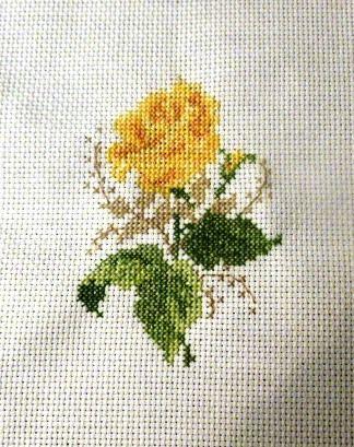 rosa mini gialla