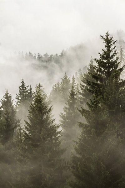 midnattsulv:  the foggy forest by stachelpferdchen