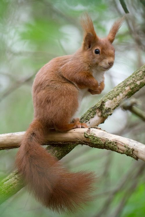 Small Animal Reptiles And Amphibian Habitats: 24 Best Chipmunks And Squirrels Images On Pinterest