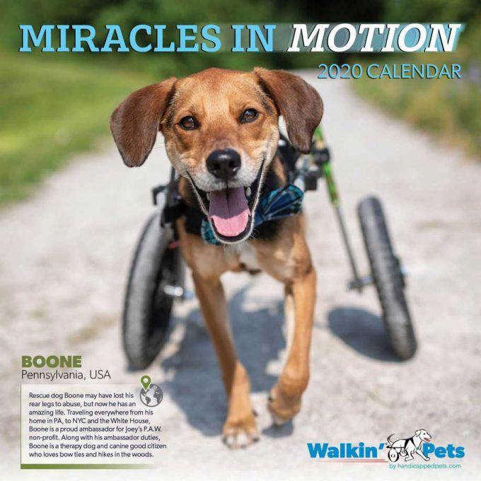 2020 Walkin Pets Calendar Dog Wheelchair Calendar Dog Wheelchair Dogs Pets