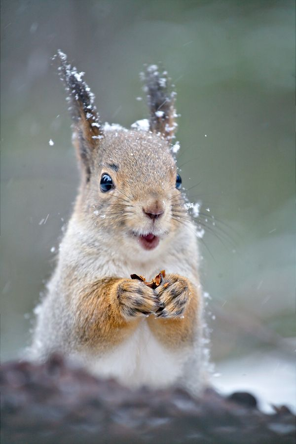 Happiest Little Squirrel Ever !