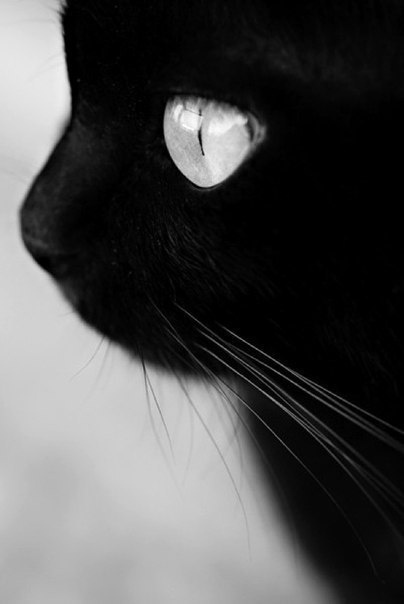Cute Animals:  black cat