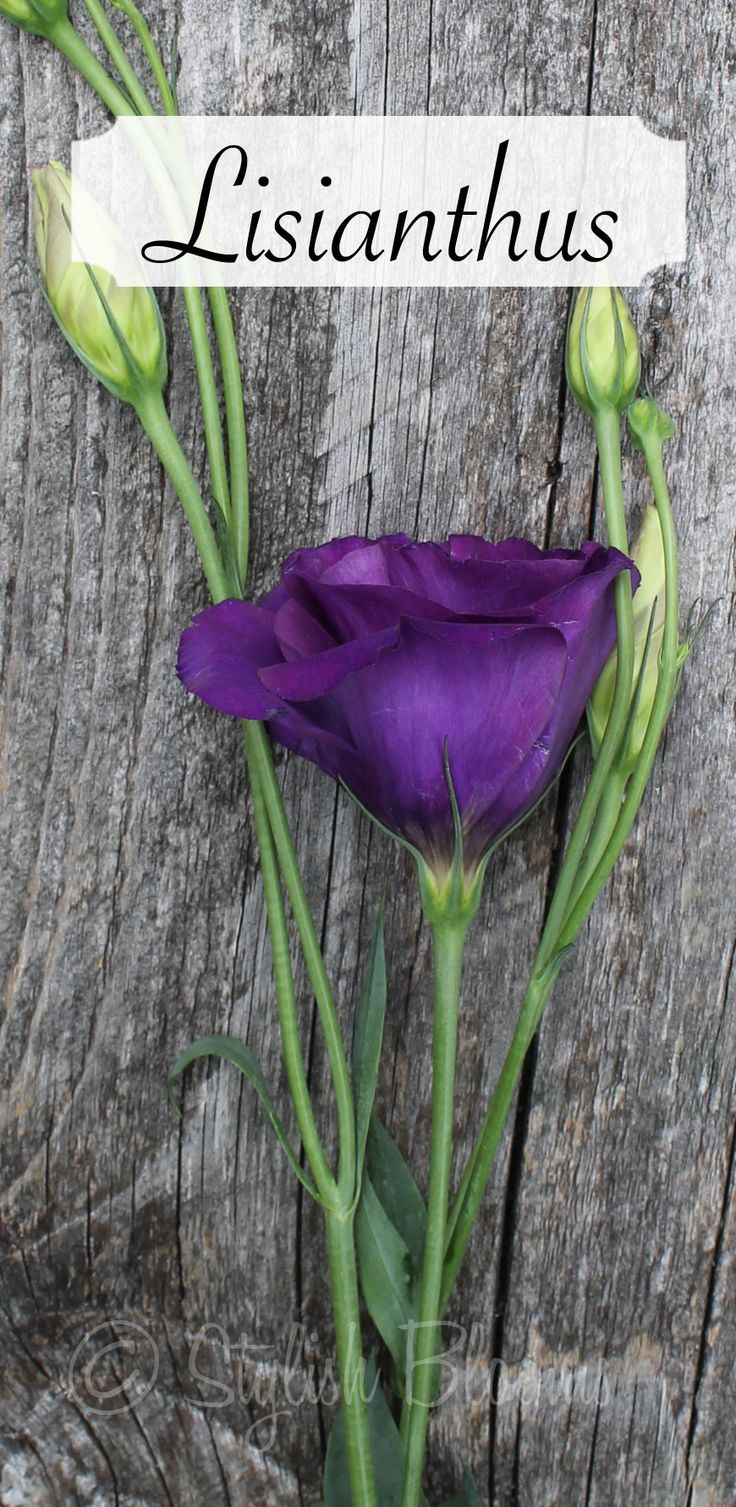 Purple Lisianthus- for the bride & groom